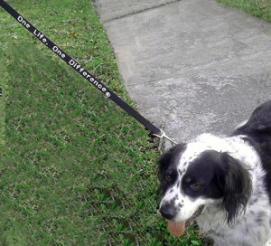One life, One difference dog leash